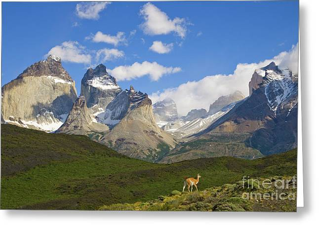 Guanaco And Cuernos Del Paine Peaks Greeting Card