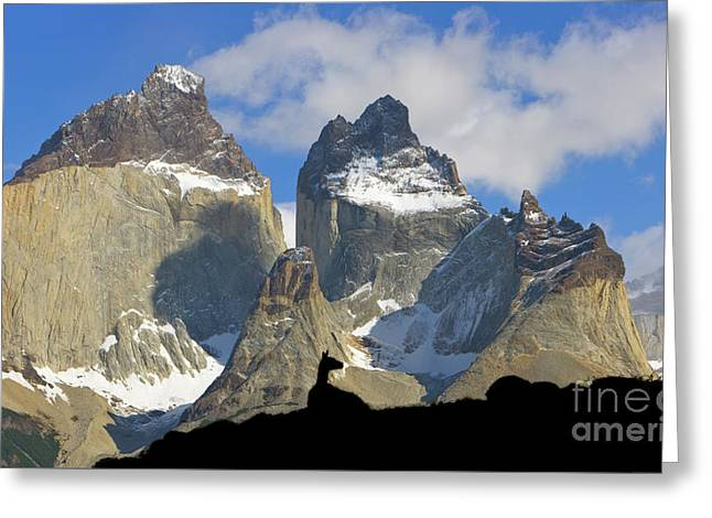 Guanaco And Cuernos Del Paine Greeting Card