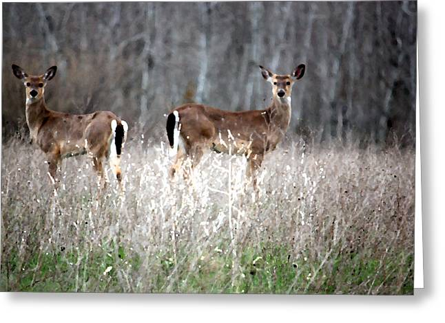 Greeting Card featuring the photograph Guard Duty Whitetail Deer by Penny Hunt