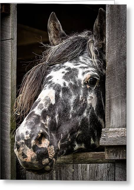 Guard Horse-what's The Password? Greeting Card