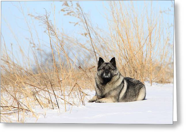 Guardian Of The Arctic Land Greeting Card by J Laughlin