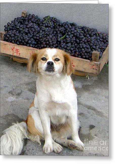 Guardian Of The Grapes Greeting Card by Barbie Corbett-Newmin
