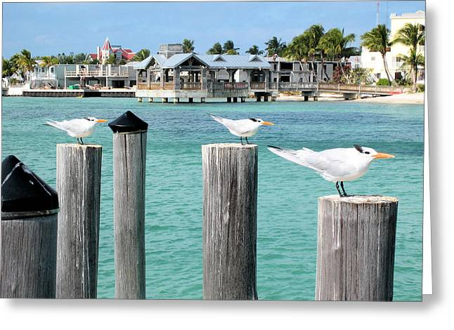 Guardians Of Key West Greeting Card
