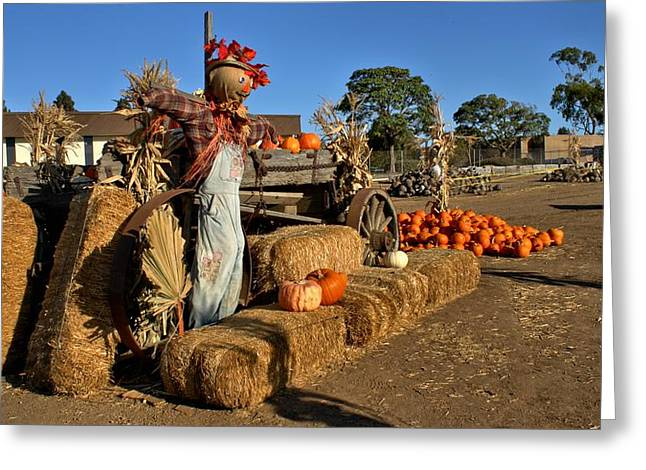 Guarding The Pumpkin Patch Greeting Card by Michael Gordon