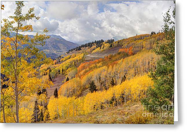 Guardsman Pass Aspen - Big Cottonwood Canyon - Utah Greeting Card