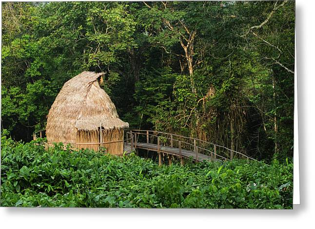 Guest Cabin, Ngaga Camp, Congo Greeting Card
