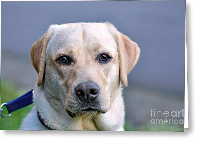 Guide Dog In Training Greeting Card by Kaye Menner
