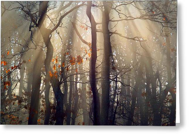 Guiding Light Greeting Card by Dianne Cowen