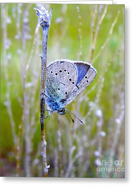 Guilded Blue Greeting Card