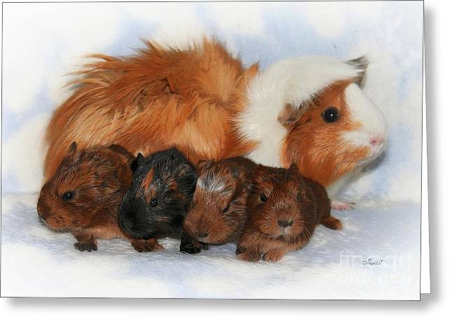Guinea Pig Family Greeting Card by Jutta Maria Pusl