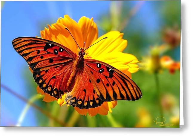 Gulf Fritillary Greeting Card by Ludwig Keck