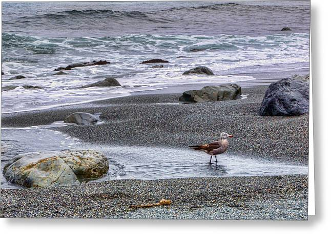 Gull And Black Sand Beach - California Greeting Card