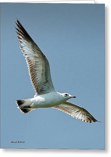 Gull At Ferril Lake Greeting Card by Stephen  Johnson