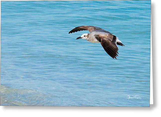 Gull At Lido Beach IIi Greeting Card