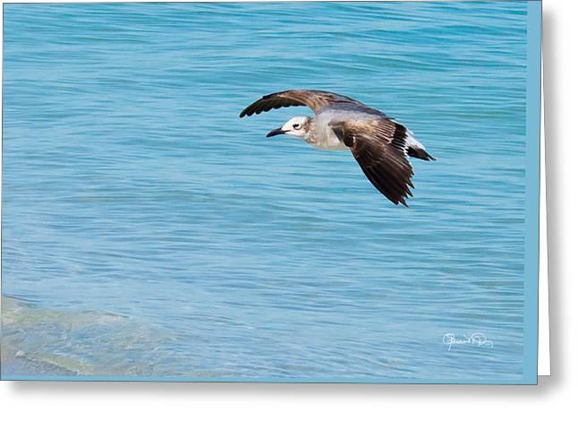 Gull At Lido Beach IIi Greeting Card
