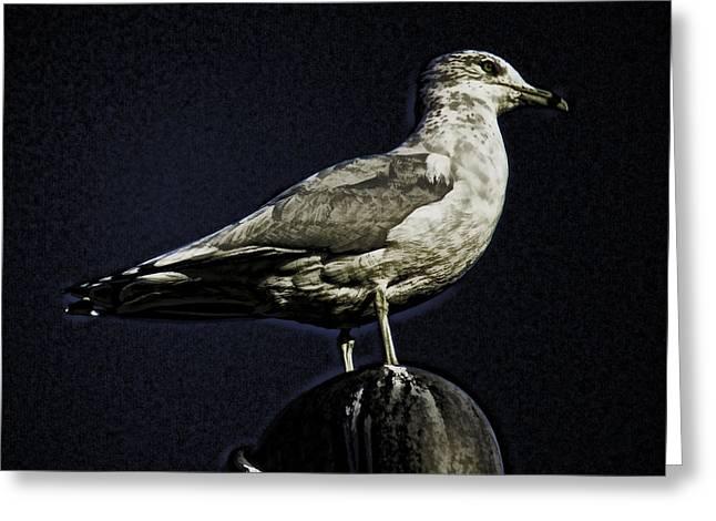 Gull At Sundown Greeting Card by Joe Bledsoe
