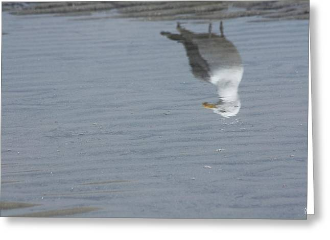 Gull At The Beach Greeting Card