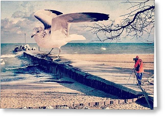 #gull #beautiful #bird #seagull #water Greeting Card by Jill Battaglia