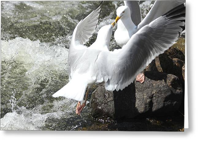 Gull Greeting Greeting Card