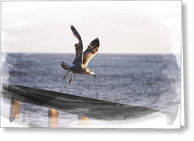 Gull In Flight Greeting Card by Martin Newman