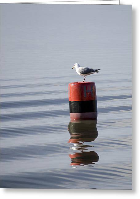 Gull Greeting Card