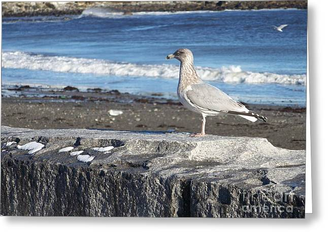 Seagull  Greeting Card by Eunice Miller