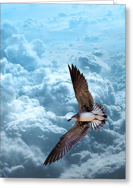 Gull On Teal Clouds  Greeting Card