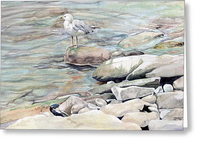 Gull On The Rocks Greeting Card