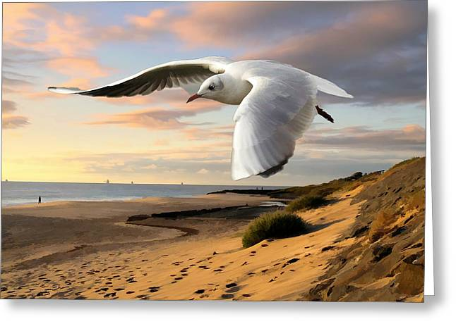 Gull On The Wing Over Beach Landscape Greeting Card by Elaine Plesser