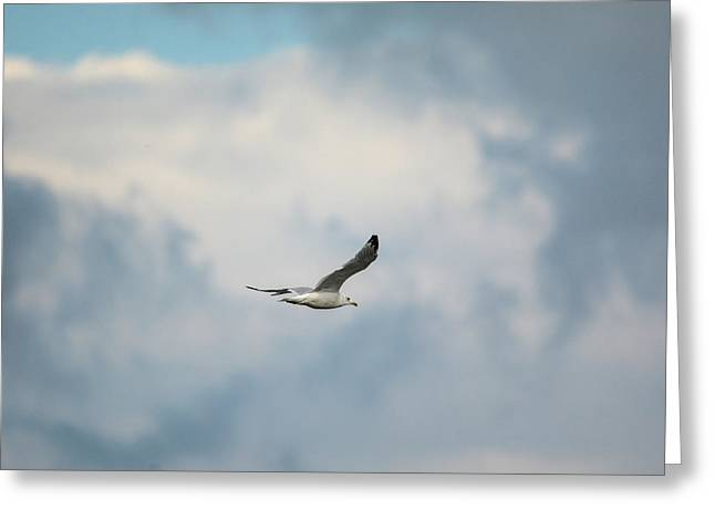 Gull Over Paris Landing Greeting Card by Jai Johnson