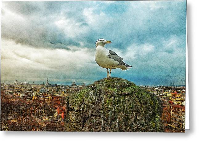 Gull Over Rome Greeting Card by Jack Zulli