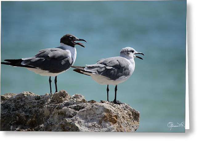 Gull Talk Greeting Card