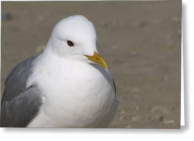 Gull Greeting Card by Tara Lynn