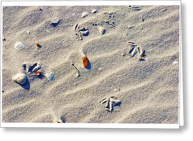 Gull Tracks Greeting Card