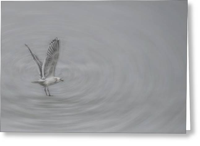 Gull Vortex Greeting Card