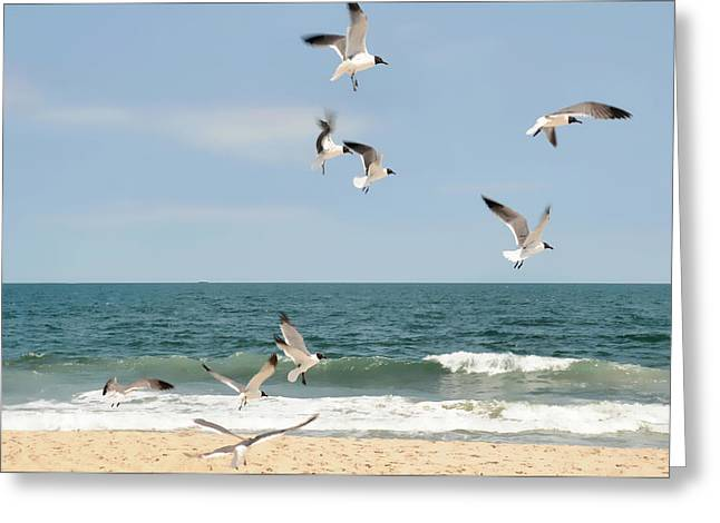 Gulls A Dance'n Greeting Card by Diana Angstadt