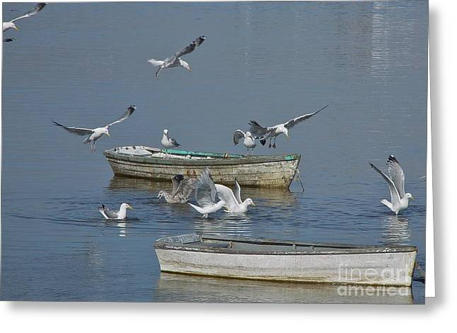 Gulls And Dories Greeting Card