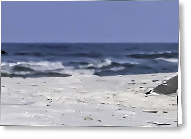 Gulls By The Sea Greeting Card by CarolLMiller Photography