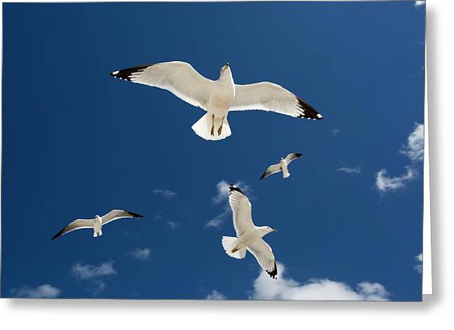 Gulls Flying Against Blue Sky Greeting Card