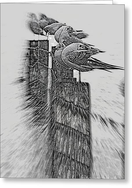 Greeting Card featuring the photograph Gulls In Pencil Effect by Linsey Williams