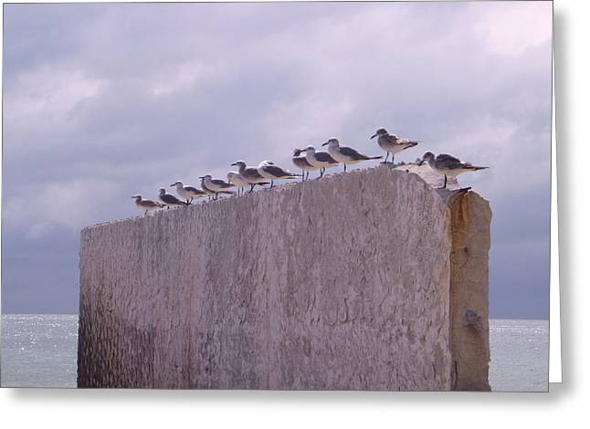 Gulls Greeting Card