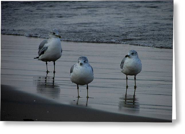 Greeting Card featuring the photograph Gulls Night Out by Kimberly Mackowski