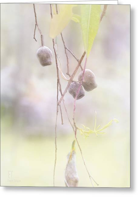 Gum Nuts Greeting Card by Elaine Teague