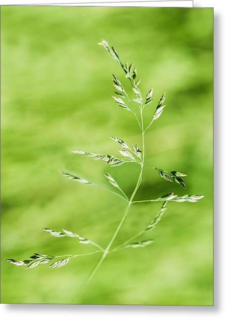 Gust Of Wind - Featured 3 Greeting Card by Alexander Senin