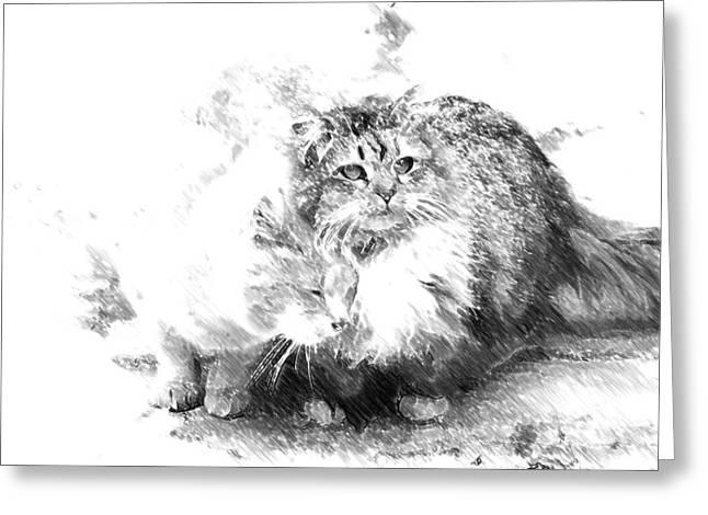 Gutter Kitties Six Greeting Card