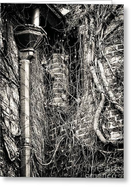 Gutter Pipe Greeting Card by John Rizzuto
