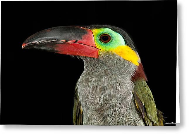 Guyana Toucanette Greeting Card