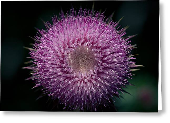 Gynormous Thistle Greeting Card