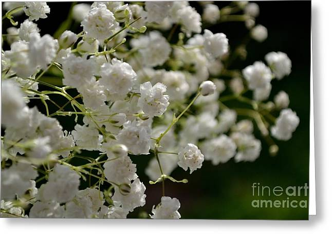 Gypsophilia Greeting Card
