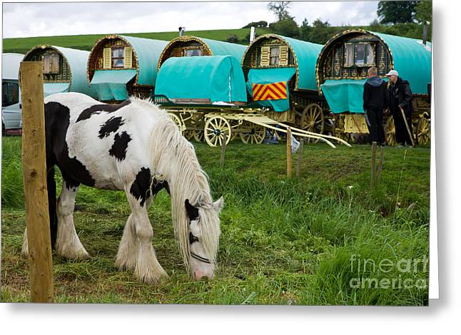 Gypsy Cob And Wagons Greeting Card